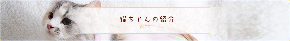 猫ちゃんの紹介
