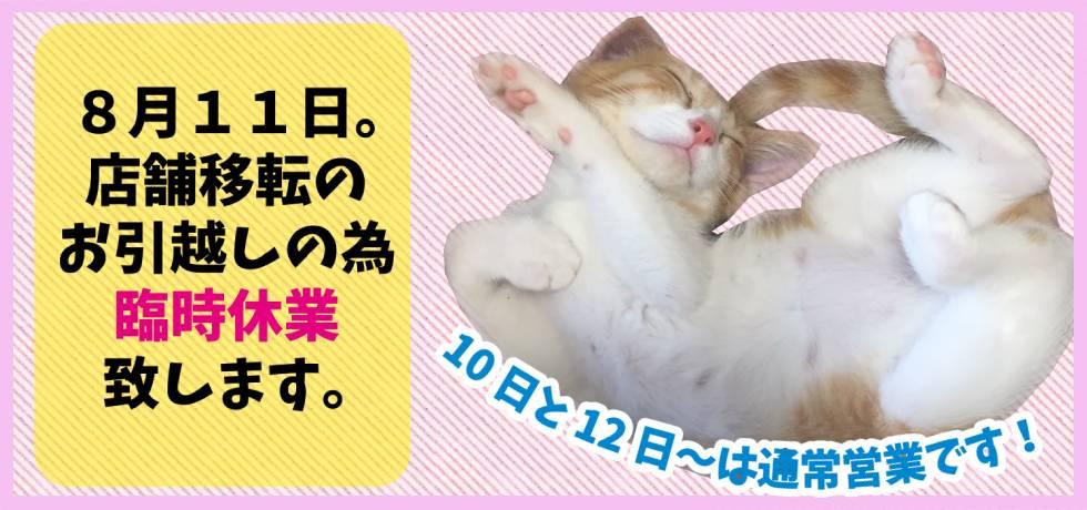 子猫専門店「そるにゃんズ」